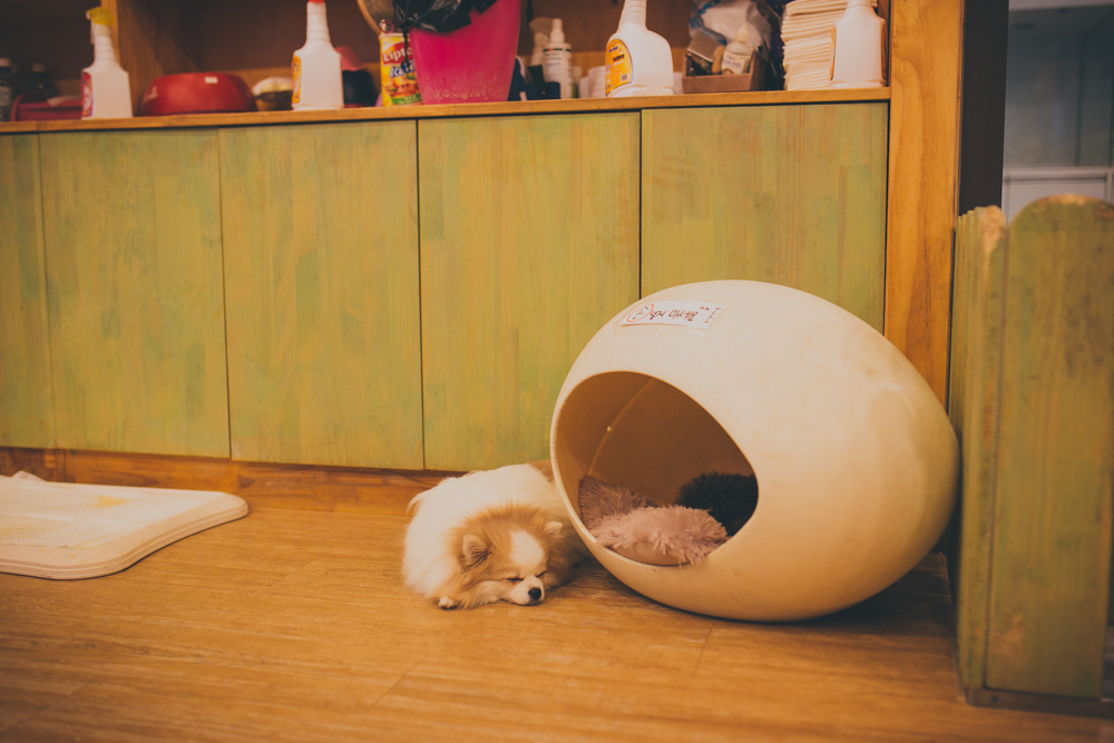 hongdae dog cafe seoul south korea halfdazed sarah kuszelewicz photography